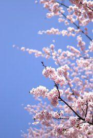 http://mini-cactus.cowblog.fr/images/japon11.jpg